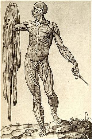 Anatomia del corpo humano Rome, 1559 Copperplate engraving National Library of Medicine Juan Valverde de Amusco (anatomist).jpg